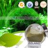 Organische Chlorella-Großhandelstabletten/Kapsel