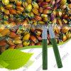 صاحب مصنع إمداد تموين ماء - [سلوبل] زهرة غردينيا اللون الأخضر