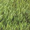 Трава относящой к окружающей среде дерновины Sythetic искусственние/лужайка искусствоа