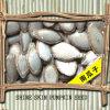 Chinesisches Pumpkin Seed mit Shell