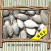 Shellの中国のPumpkin Seed