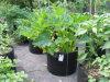 Casa Using o potenciômetro esperto do plantador não tecido portátil do potenciômetro dos vegetais da tela