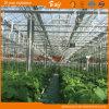 De lange Serre van het Glas van de Levensduur voor het Planten van Komkommer/Tomaten
