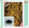 Extracto natural del extracto Powder/Seaweed de Nodosum Extract/Ascophyllum Nodosum del Ascophyllum del 100%