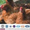 Engranzamento da galinha