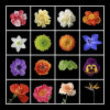 家の装飾のための花のCanasの印刷の芸術