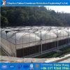 Дом коммерчески крупноразмерной пленки Hydroponics зеленая для томата