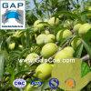 Manufacturers Supply Natural Plum Powder