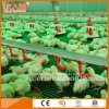 Автоматическая цыплятина контролирует оборудование сарая для бройлера с универсальный обслуживанием
