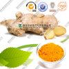 Curcumine 95% de grossiste d'extrait de gingembre de fabricant