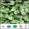 Conversão artificial protegida UV da planta da folha de Bush das hortaliças ao ar livre
