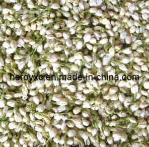 Dried Jasmine Flower, for Flower Tea Use