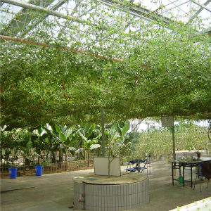 Eco-Friendly Sightseeing Glass House / Sightseeing Greenhouse-Helen