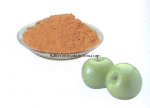 High Quality Hop Extract & Apple Extract with Polyphenols, Phloridzin & Phloretin pictures & photos