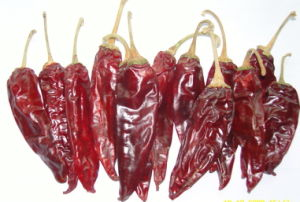 American Red Chilli