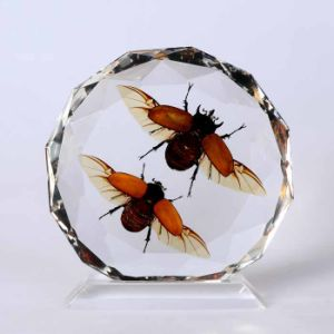 Insect Amber Desktop Decoration (BC022)