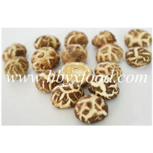 2-2.5cm Dried Edible White Flower Shiitake pictures & photos