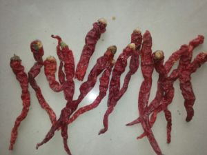 New Crop High Quality for Sale Xian Chili pictures & photos