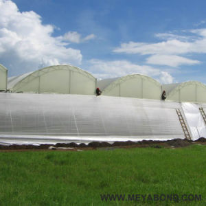 HDPE white Agriculture Anti Insect Net ( 50-240 g/m2 ) pictures & photos
