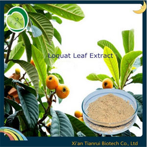 Loquat Leaf Extract Ursolic Acid pictures & photos