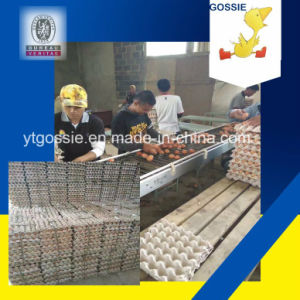 Multi-Function Paper Egg Tray Making Machine pictures & photos