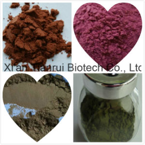 High-Quality Natural Ginseng Leaf Extract/Ginseng Extract 10: 1 by HPLC pictures & photos