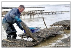Virgin PE Oyster Mesh Bag for Oyster Farming pictures & photos