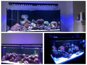 70W Intelligent 16 Inches LED Aquarium Light for Fish Tank pictures & photos