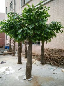 Fake Huge Banyan Trees for Outdoor Decoration pictures & photos