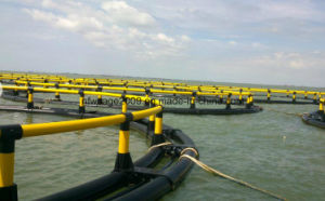 HDPE Submersible and Rising Cage for Fish Farming pictures & photos