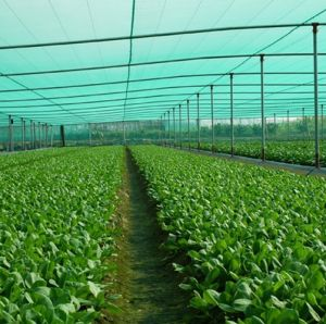 Green Vegetable Plants Trellis Insect Nets pictures & photos
