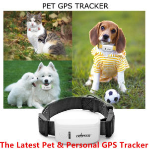 Low Price! High Quality, 2015 New Tk909 Tk Star Pet GPS Tracker Personal Item GPS Tracker/Ios APP and Andriod APP Pet GPS Tracker with Free Web Track Platform pictures & photos