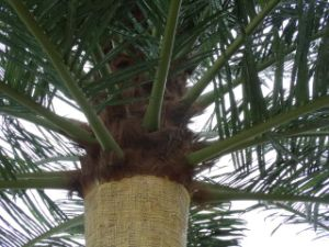 Disguised Palm Tree Antenna Tower pictures & photos
