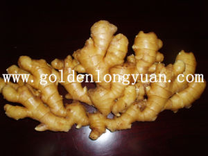 Godlen Supplier Air Dry Ginger, Fresh Ginger pictures & photos