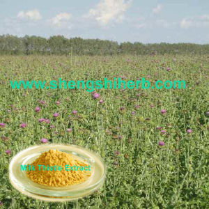 Milk Thistle Extract (Silymarin)