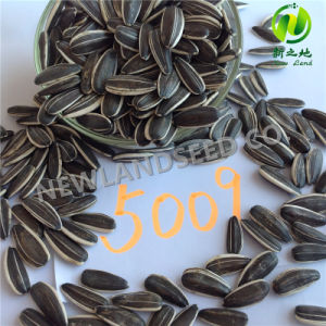2016 Wholesale Heath and Organic Sunflower Seeds 5009 to World pictures & photos