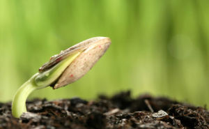 Seed Treatment Imidacloprid + Thiram Fs Pesticide pictures & photos