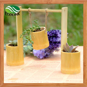 Creative Swing Bamboo Flowerpot/ Succulent Pot pictures & photos