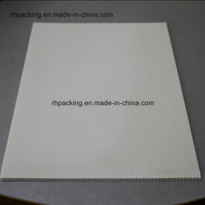 Natural Corflute PP Corrugated Plastic Board for Japan Market 1820*910mm pictures & photos