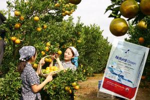 Water Soluble Fertilizer NPK>50% pictures & photos