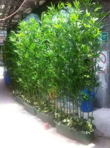 Best Selling Artificial Plants of Bamboo Gu-SL5092710 pictures & photos