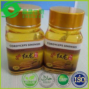 Fuction Power Supplement Cordyceps Mycelium Capsules pictures & photos