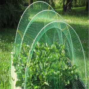 Plastic Netting for Anti Bird/Anti Insect/Anti Hail pictures & photos