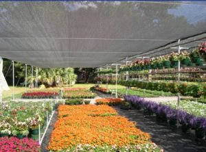 90% Shading Rate Sun Shade Net for Vegetables pictures & photos