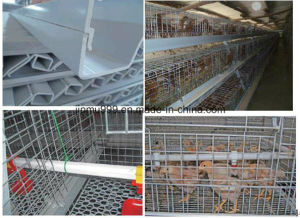 New Design Cheap Pullet Chicken Birds Cage for Poultry Farm Use pictures & photos