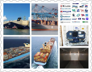 Flexible Consolidateseashipping for Special Container From China to Dubai pictures & photos