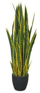 Artificial Plants and Flowers of Sansevieria Yellow Edge pictures & photos