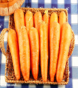 Shandong China Fresh Carrots for Hot Sale pictures & photos