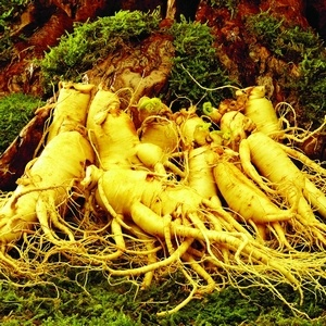 Water Soluble Korean Red Panax Ginseng Extract (HY075)