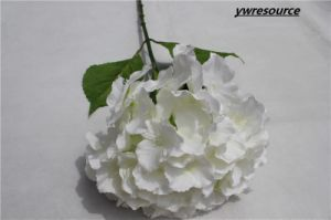 Wedding Decorative Artificial Flower White Artificial Hydrangea Flowers pictures & photos